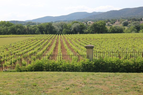 Photo vignes 1